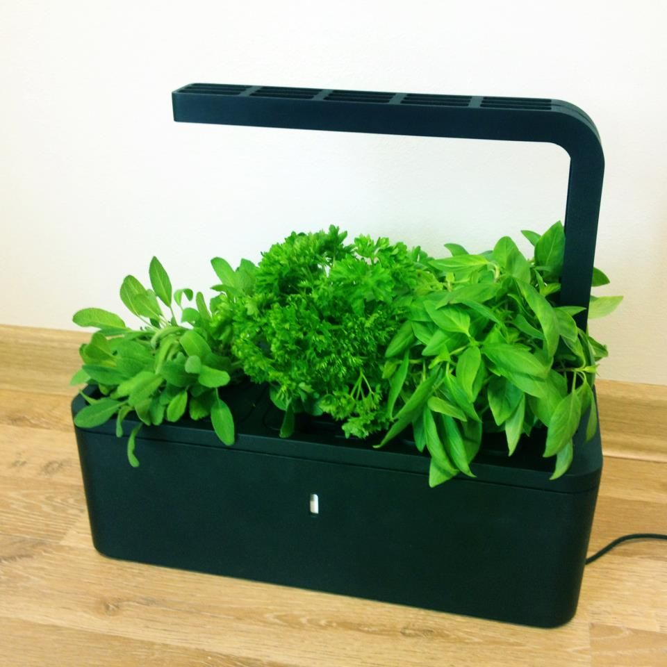 Click and grow low maintenance indoor vegetable and herb for Low maintenance vegetable garden ideas