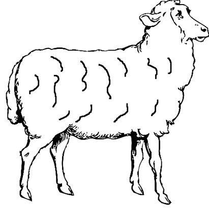 schaf-malvorlage.jpg (411×416) | 03.08.0020 Schaf - Zeichnungen ...