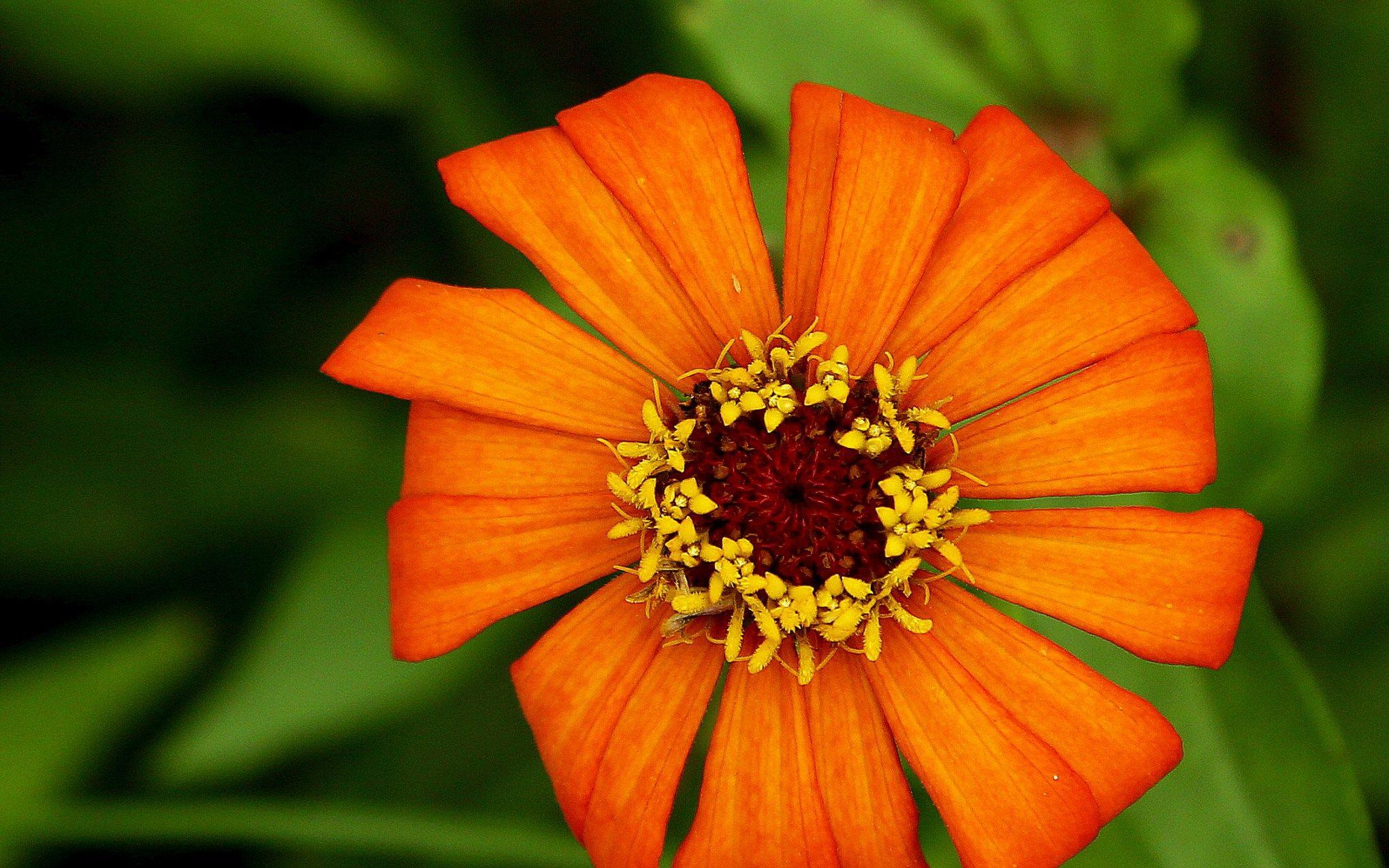 Flower Wallpaper Nursery Shot With Canon 5d Download Hd Desktop