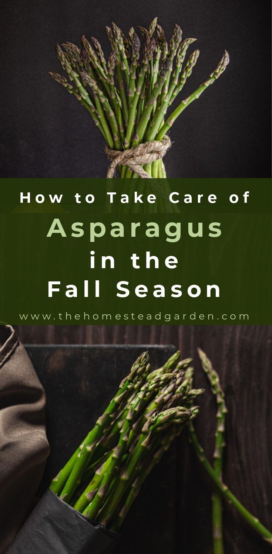 How to Grow Asparagus - | Backyard vegetable gardens ... Planting Asparagus In The Fall