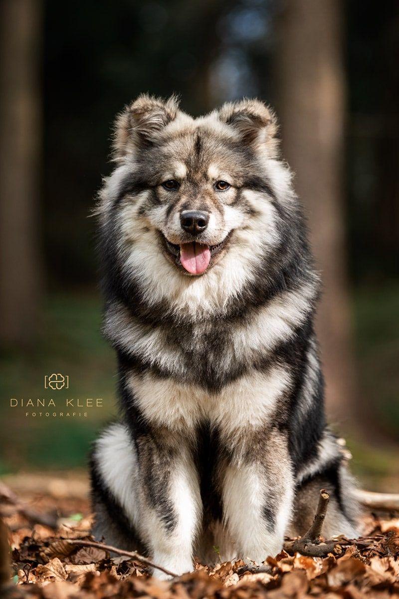 Hundefotografie Im Markischen Kreis Und Nrw Hunde Fotos Hundefotos Und Hundefotografie