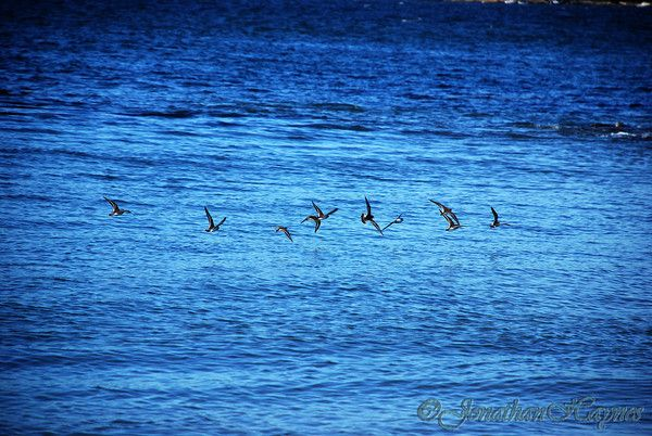 Flock of birds flying off Fort Getty in Jamestown RI