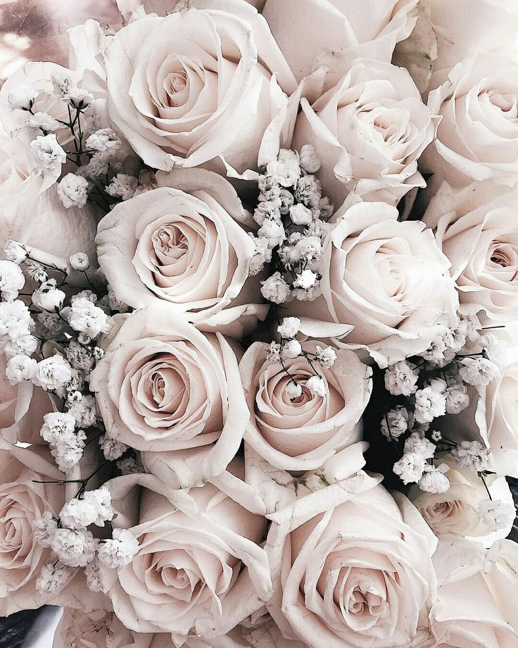 dusty pink roses Flower backgrounds, Flower aesthetic
