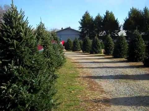 Long Island Neighborhoods Santa S Christmas Tree Farm Cutchogue Ny Christmas Tree Farm Tree Farms Santa Christmas