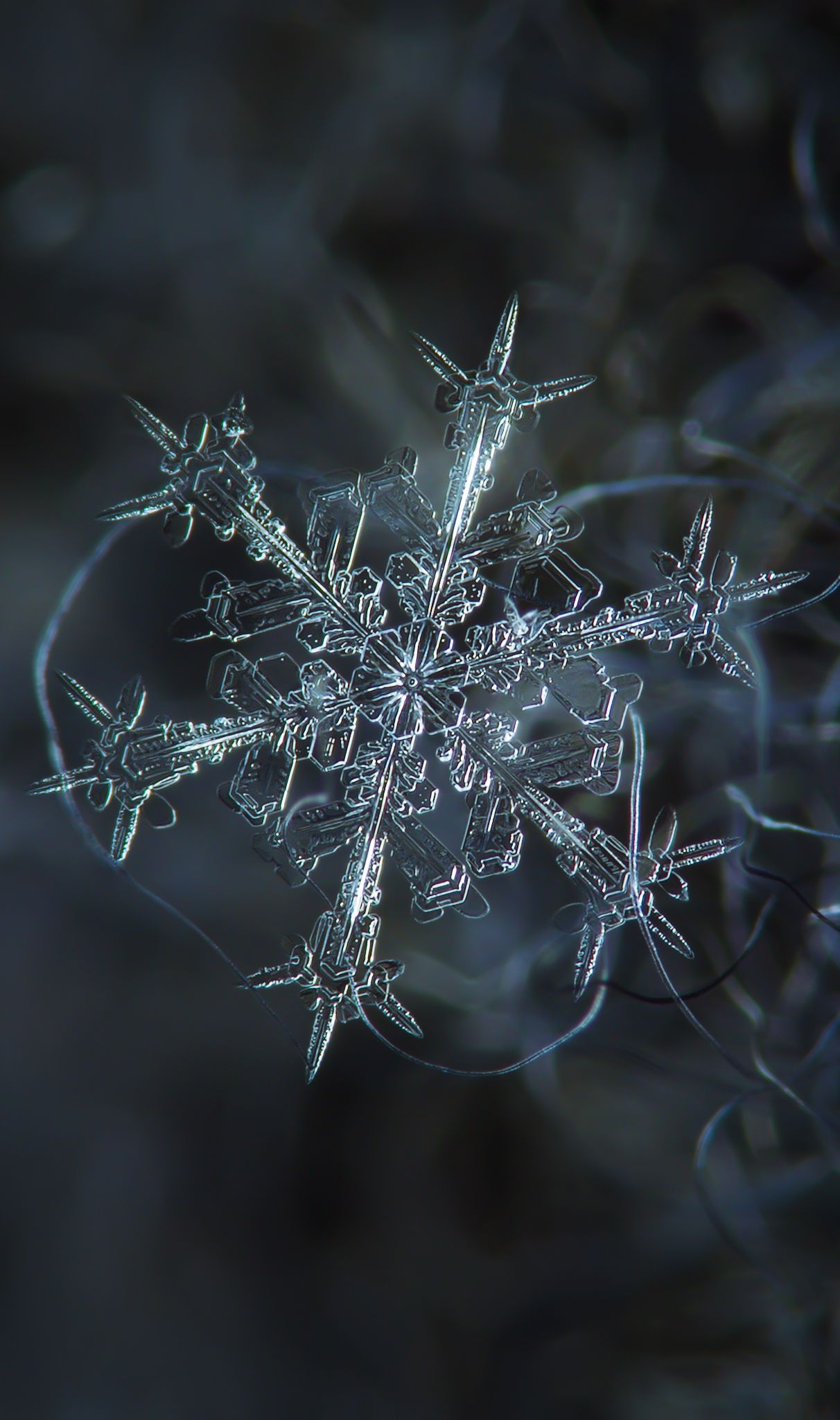 snowflake macro photography rigs and cameras