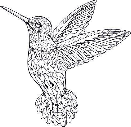 coloring page hummingbird follow for follow pin for pin  bird coloring pages animal coloring