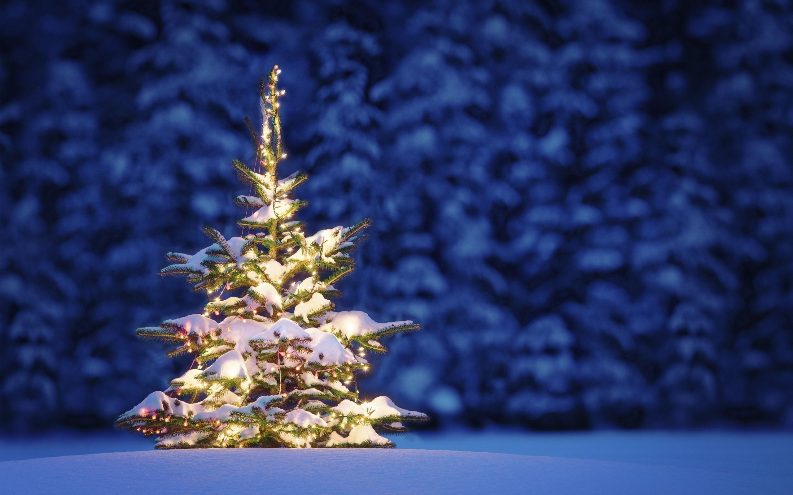 50 beautiful christmas tree wallpapers | christmas trees | pinterest