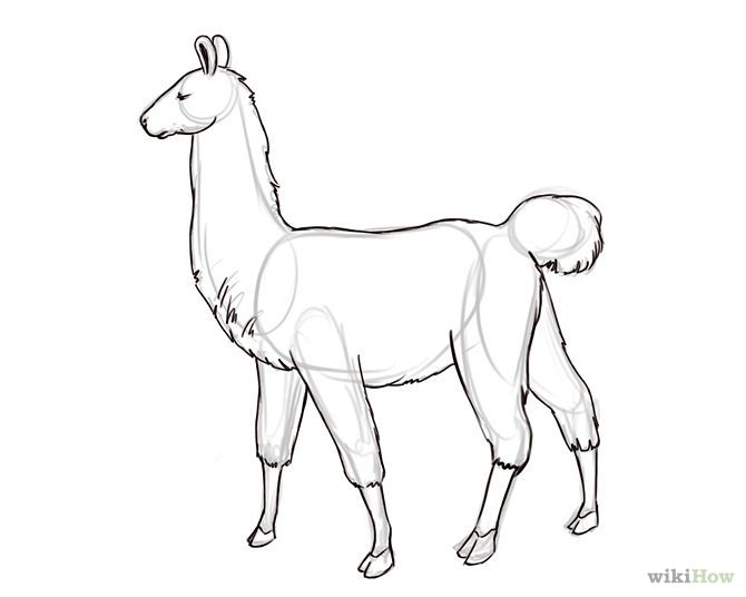 How to Draw a Llama: 6 Steps - wikiHow | llamas in 2018 | Pinterest ...