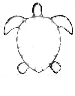 sea turtle template and voila that is suposed to be that french