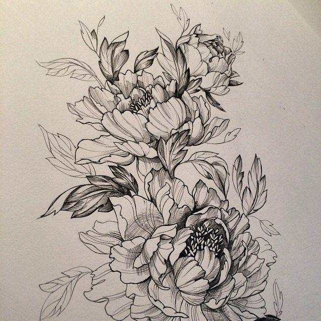 Pin By Beatriz Unger On Ink Peony Tattoos Flower Sketches Tattoo Portfolio