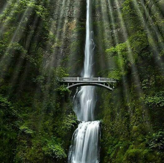 (ᵔᴥᵔ)/Multnomah Falls Oregon
