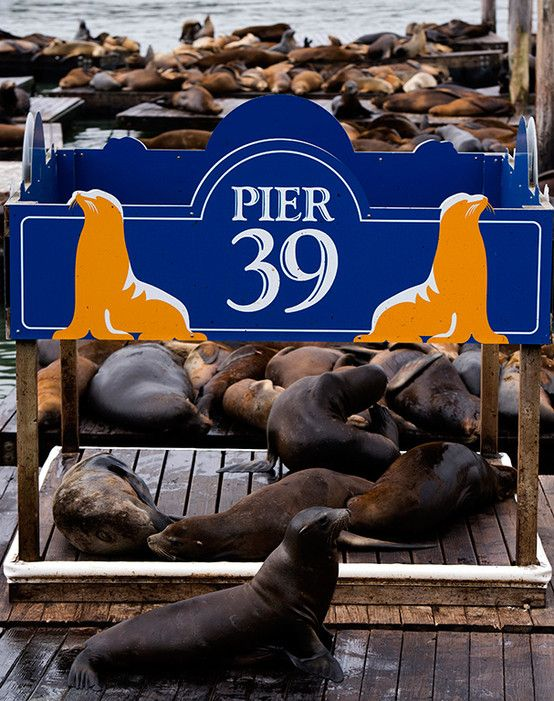 Pier 39 in the state: the California sea lions.