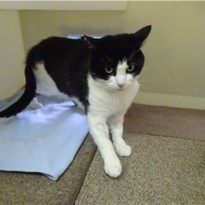 Adopt A Cat Woodside Animal Centre Rspca Leicester Rspca Leicestershire Branch Cat Adoption Cats White Cats