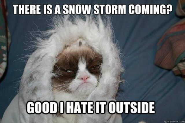 Funny Memes For Winter : The best of the juno blizzard memes memes funny pix and grumpy cat