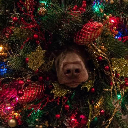 Dog inside tree