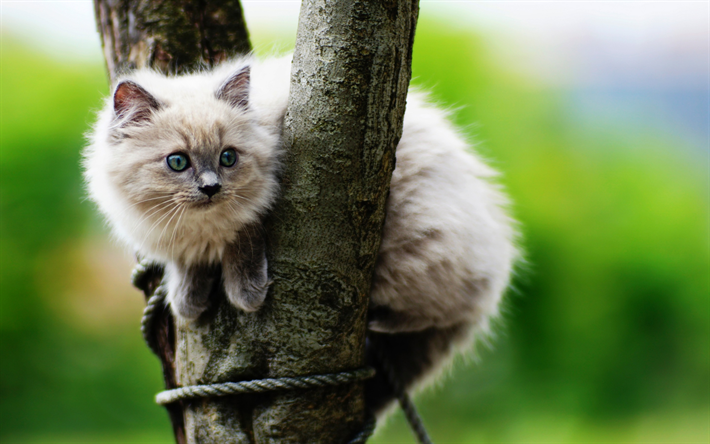 Download Wallpapers Beige Fluffy Kitten Cute Animals Pets Cats Breeds Of Fluffy Cats Besthqwallpapers Com Photographie De Chat Races De Chats Animaux Les Plus Mignons