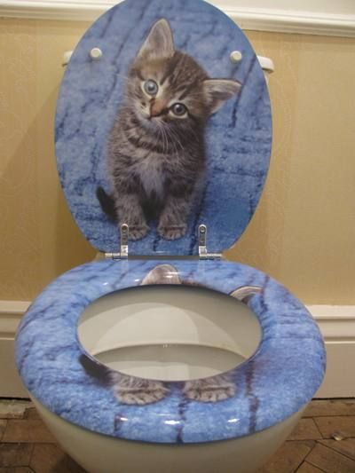 Cat Toilet Seat Why Do These Exist Just Why Cat Loo