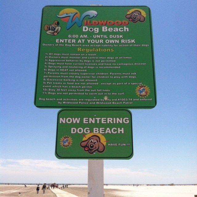 the city of wildwood nj opens new dog beach nbc40 net the jersey
