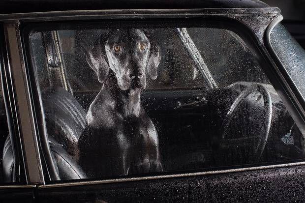The SIlence of Dogs in Cars, Martin Usborne, photographer,