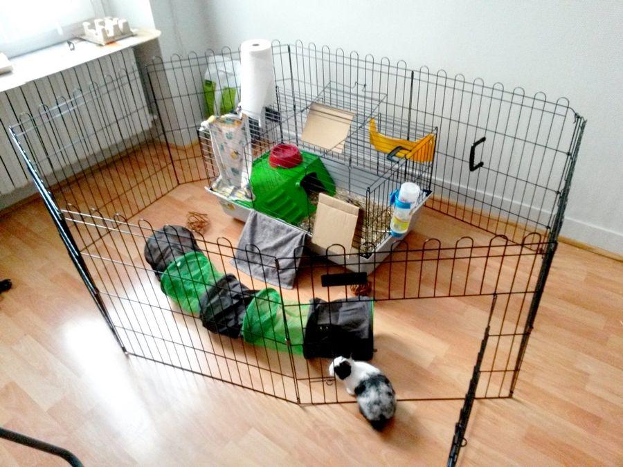 enclos d 39 int rieur lapin nain zooplus 37e chantilly lapin nain. Black Bedroom Furniture Sets. Home Design Ideas