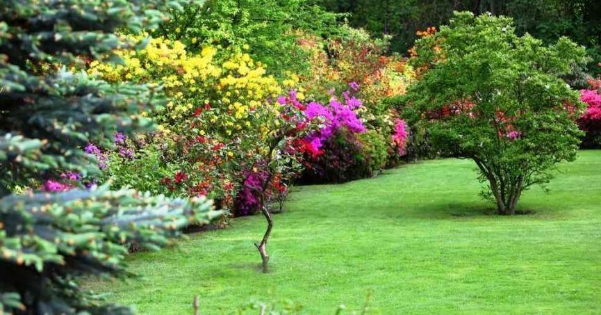 Tienes árboles y o arbustos?, ¿los podas adecuadamente? Arbustos