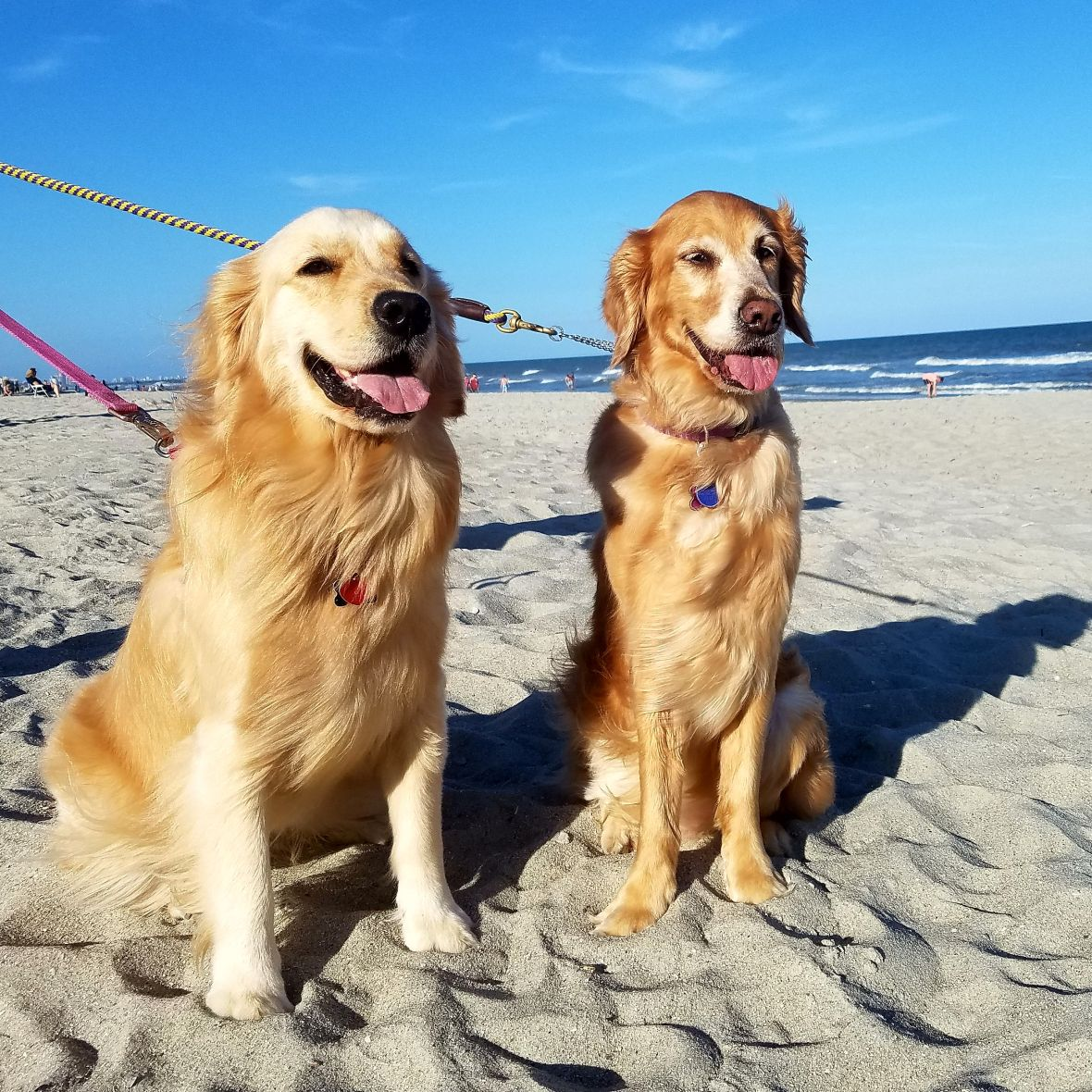 Two Blondes And A Beach Dog Friends Beautiful Dogs Beach