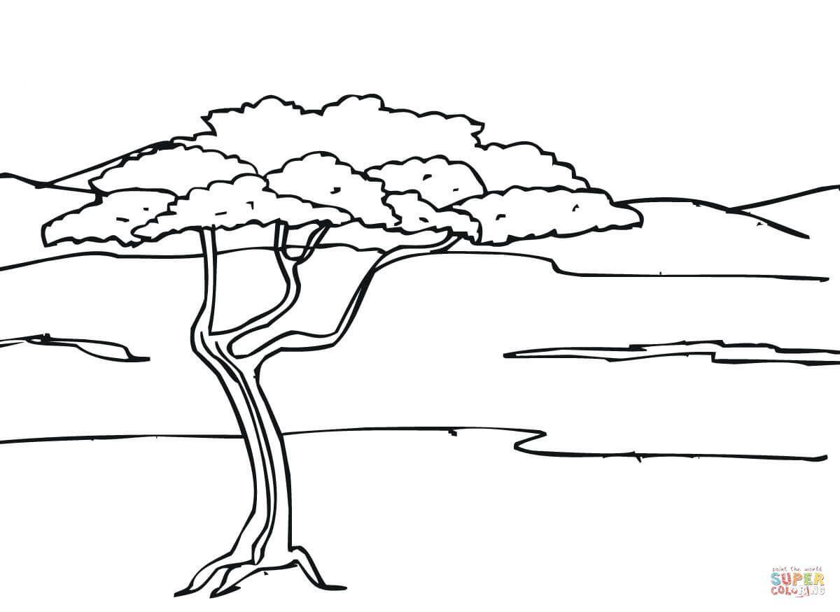 Dibujos De Jirafas Para Colorear E Imprimir: Acacia En La Sabana
