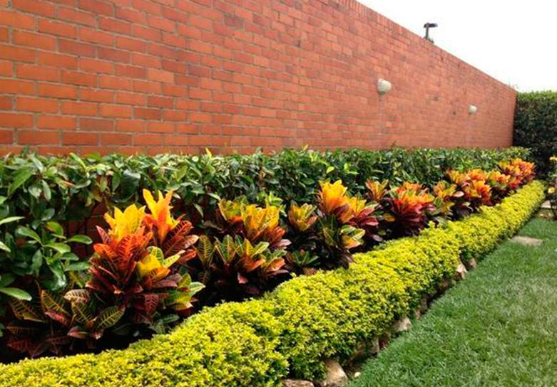 Croto en el jardin buscar con google como combinar las for Plantas decorativas ornamentales