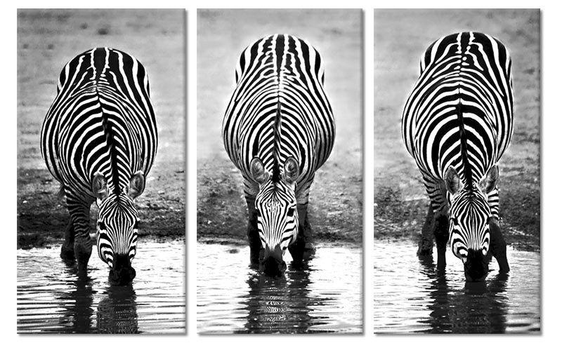 Canvas drieluik drinkende zebras foto schilderijen dieren op canvas drieluik drinkende zebras thecheapjerseys Gallery