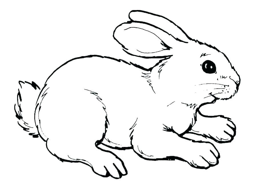 Image Result For Cute Bunnies Bunny Coloring Pages Bunny Drawing Cartoon Coloring Pages