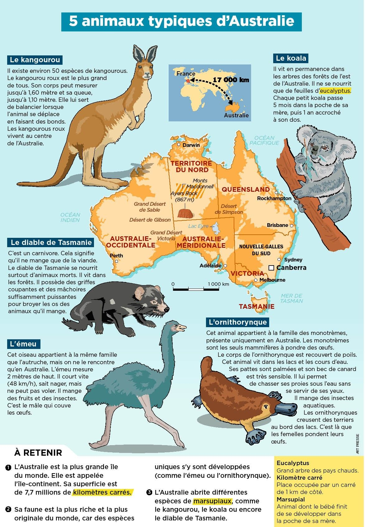 Epingle Par Kongpol Chamnan Sur Montessori Nom Des Animaux Vie Animale Zoologie