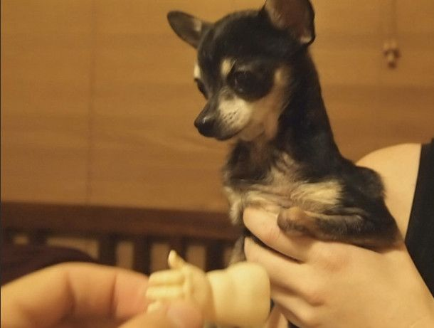 Dog Without A Paw Gets A Hand Just Look How Happy He Is