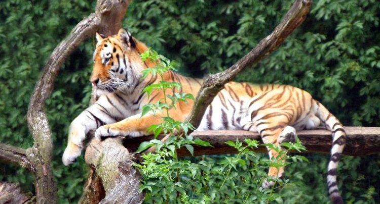 Der Tierpark Strohen Bietet Aktuell Auf Der Verkaufsplattform Groupon Einen Uberaus Interessanten Gutschein An Der Tierpark Strohen Tierpark Tiere Natur Tiere