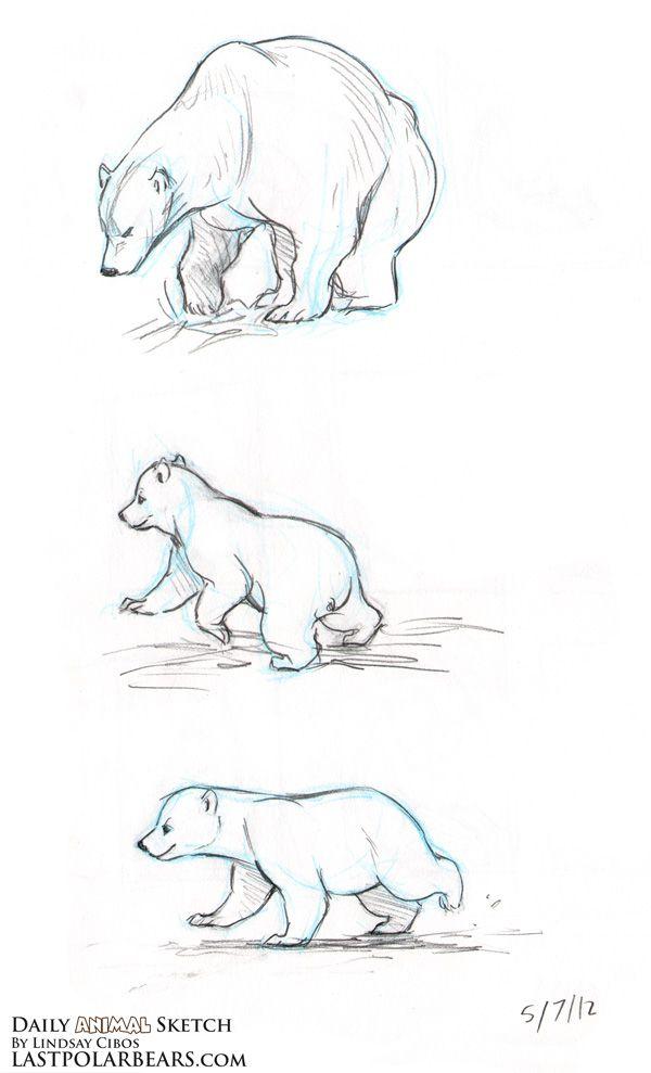 How to draw a polar bear google search dessins pinterest dessin dessin ours et petit dessin - Petit quick coloriage ...