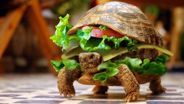 China: Disfrazó de hamburguesa a su tortuga para que viaje en avión