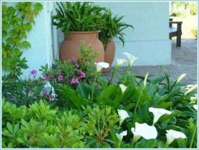 Fotos de jardines peque os para casas y sencillos for Imagenes de jardines de casas