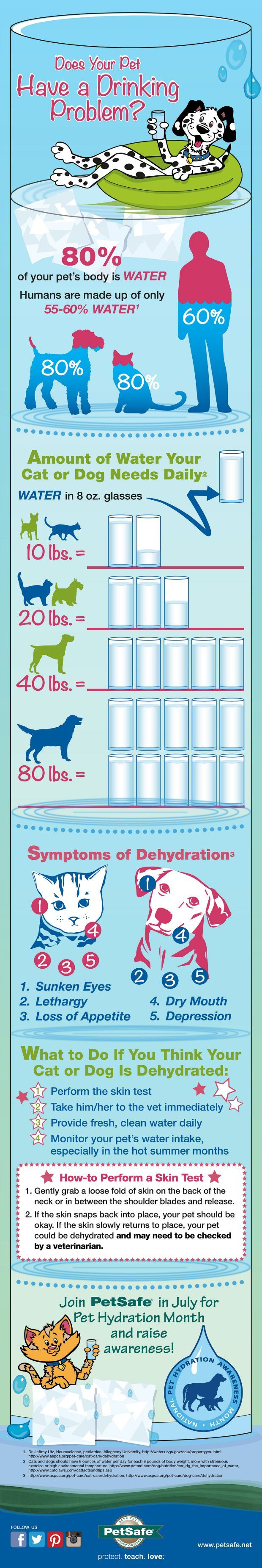 Keeping Pets Hydrated In The Summer Heat Pets, Dogs