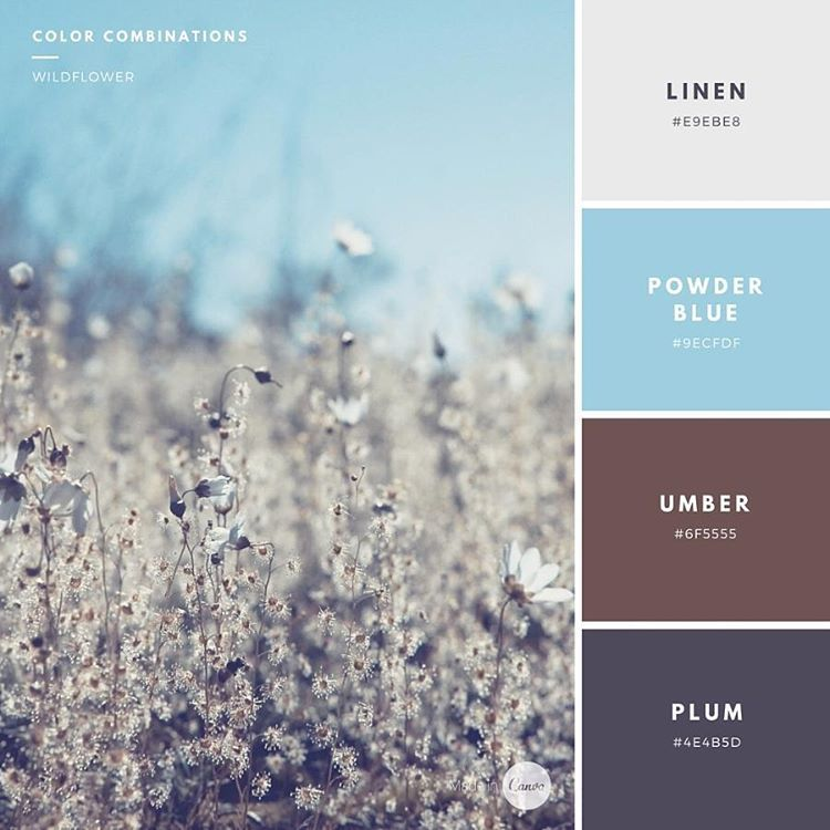 Color Combination: Wildflower. #E9EBE8 #9ECFDF #6F5555 #4E4B5D #madeincanva #wildflower #color #combination #style #palette #graphic #design #inspiration