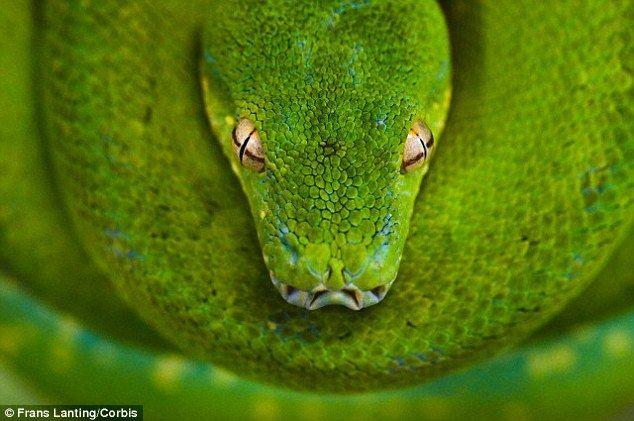 snake head | bambert refs | Pinterest | Snake reptile, Snake and ...