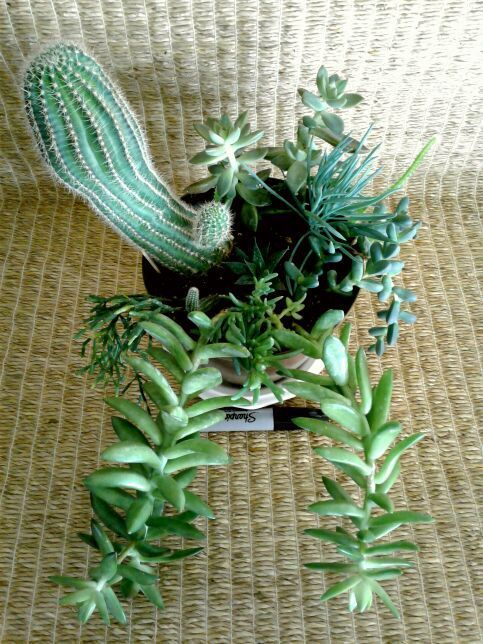 Succulents In A Brown Bioplanter For From Small Online Plant Nursery Phoenix Az Local Meetup By Ointment Or Delivery May Be Possible