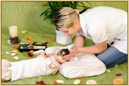 The New Vet Humane Society Animal Shelter Some Dog Spas Also Offer Overnight Accommodation Where Dogs Receive Room Service Dog Spa Dog Spa Pet Spa Pet Resort