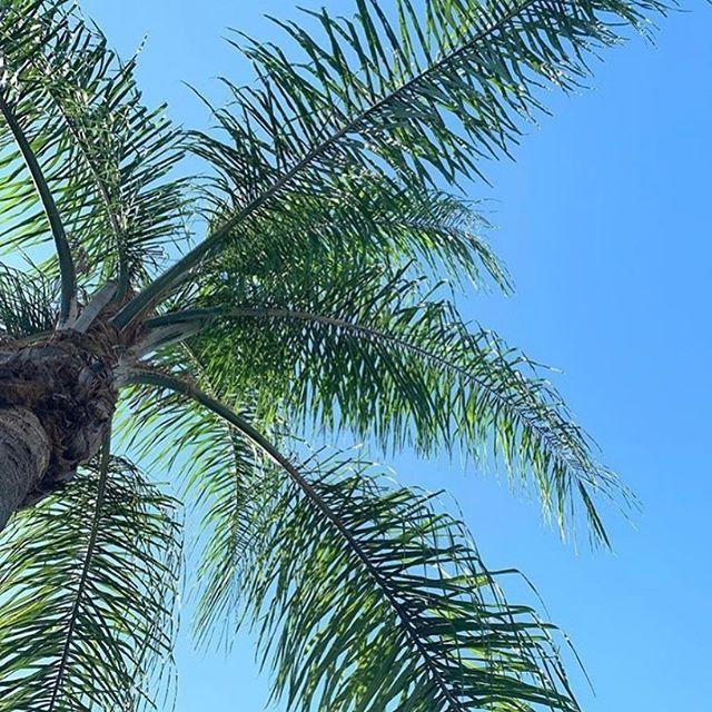 Thursday's Island life views 🌴☀🥰 . . #islandlife #onislandtime #inspiration #charleston #palmbeach #hiltonheadisland #tybeeisland #islandhaus #palmtree #palmtrees #palms #chasingadream #lovewhereyoulive #myisland