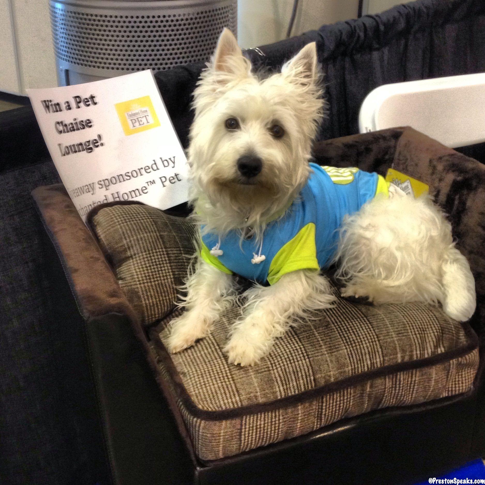 2013 Houston Pet Expo dog westie