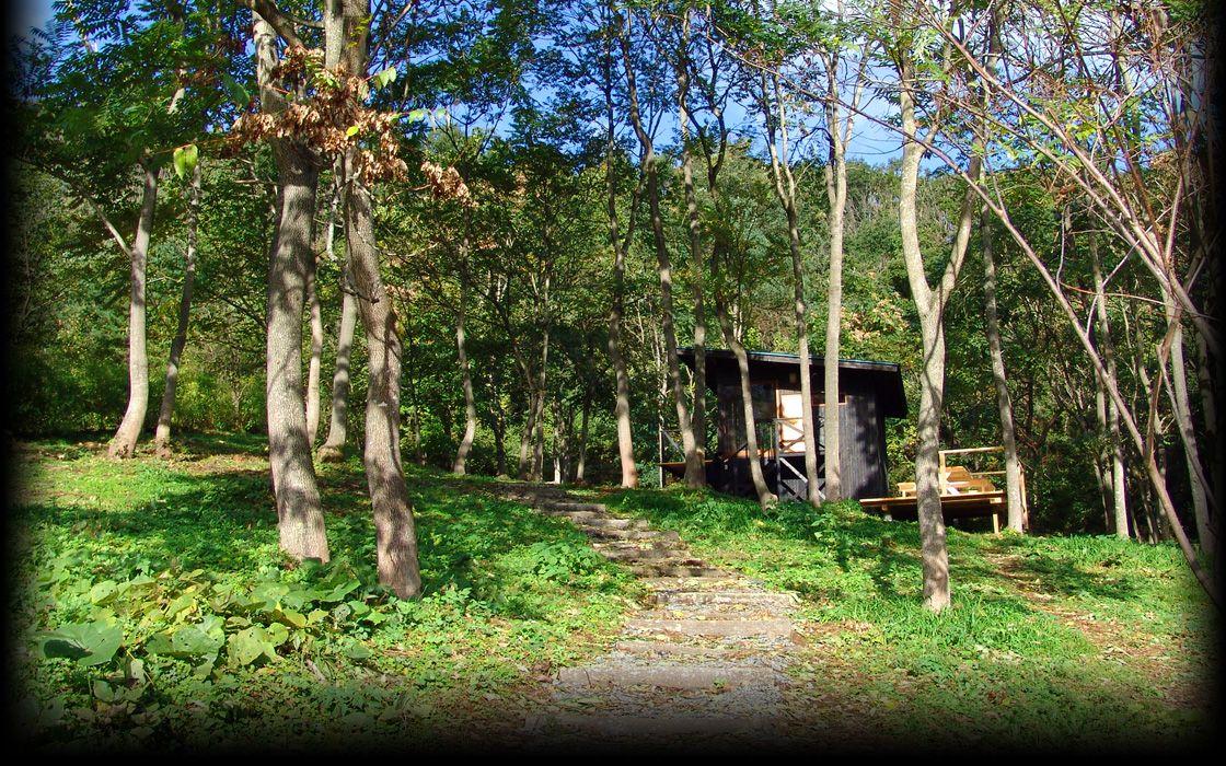 樹林中的小屋