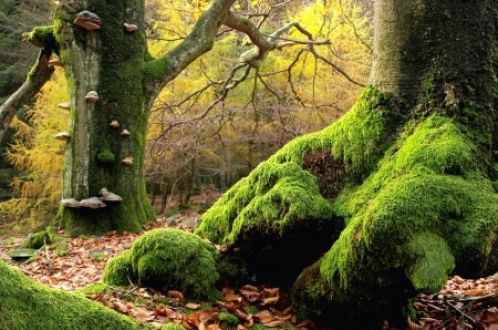 FAERIE AND ENCHANTED ANIMALS - Google Search