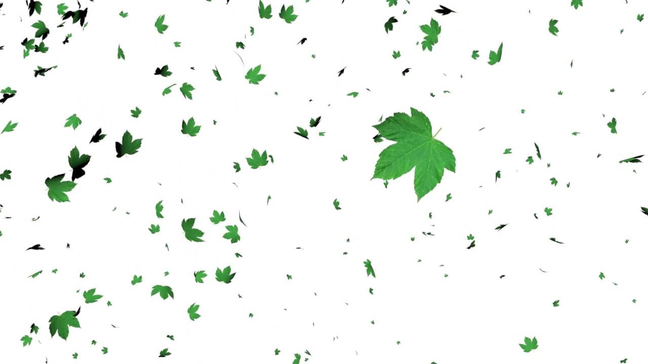 Leaves Falling Animation White Screen Effect In 2020 Green Screen Footage Smoke Animation Greenscreen
