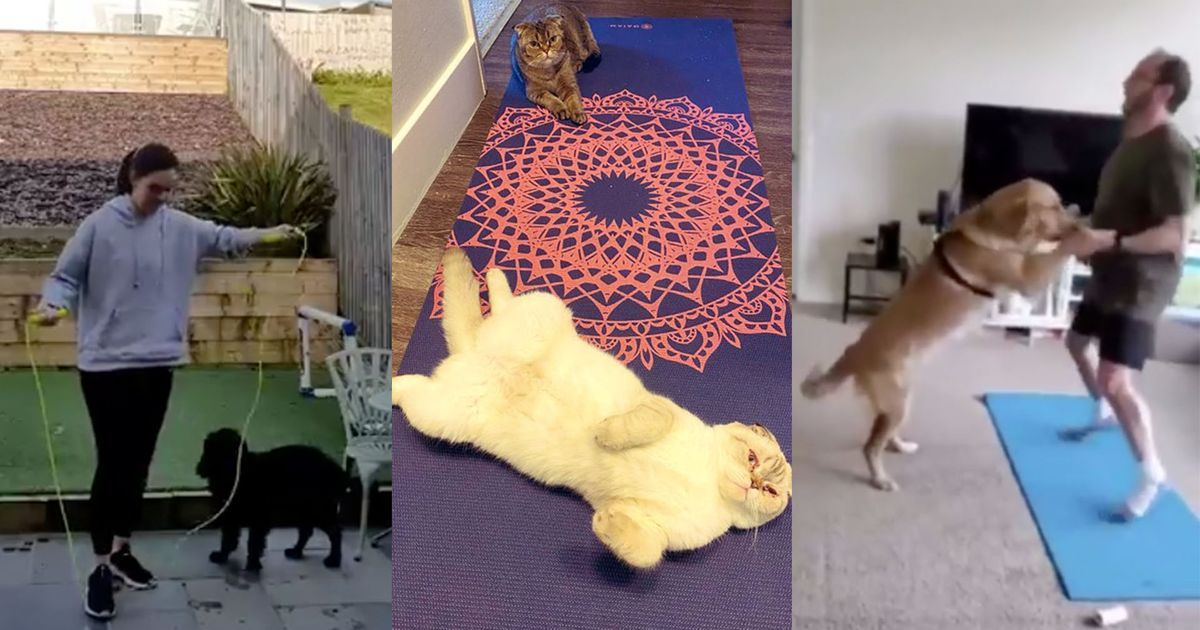 Dogs And Cats Are Refusing To Let Their Humans Work Out At Home