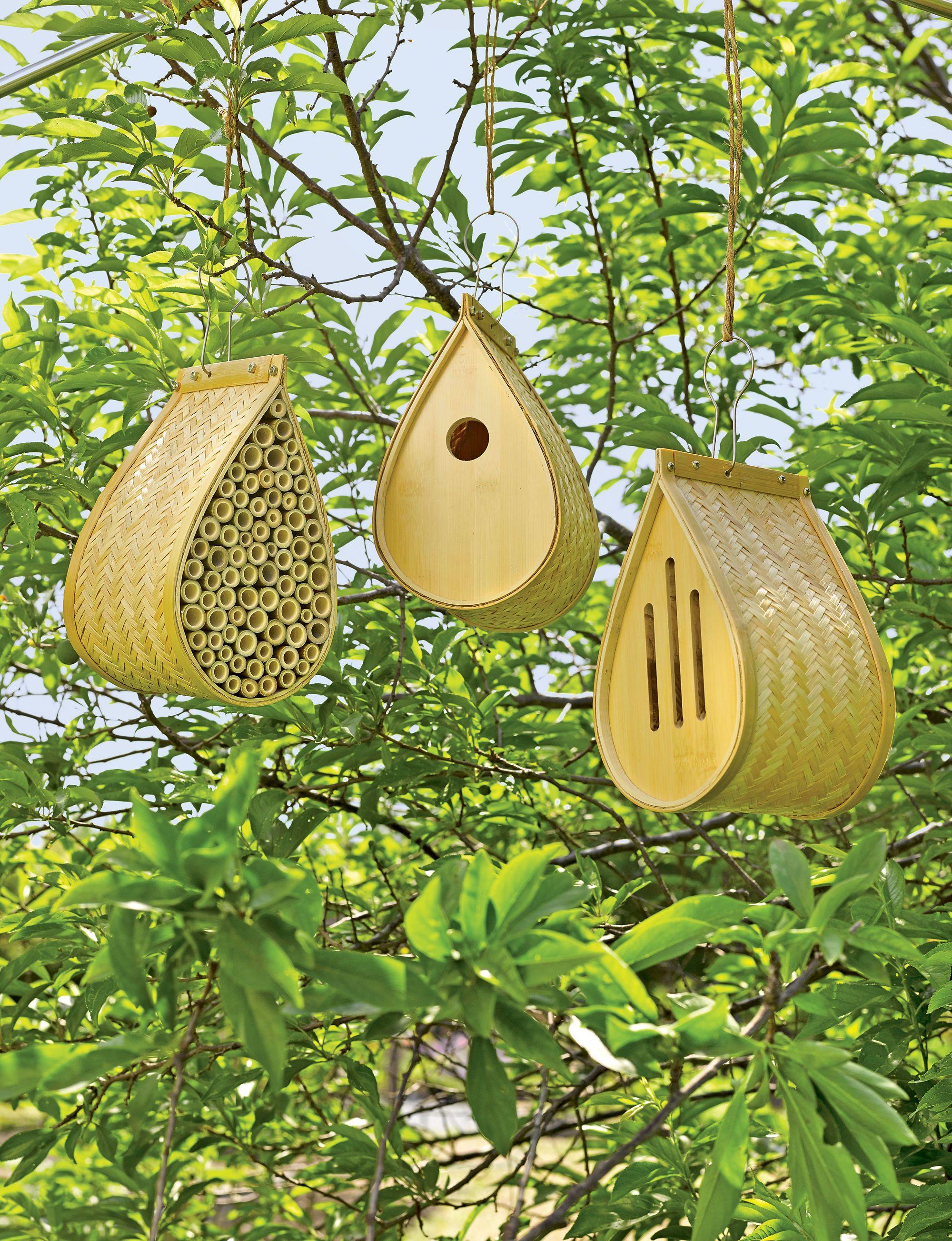 Bamboo habitat collection for butterflies songbirds