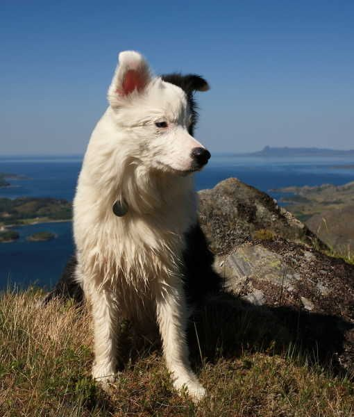 10 Cool Facts About Border Collies Tips Advice Via Www Mom Com Momlife 19435 Cool Facts About Border Collies H Border Collie Farm Dogs Best Farm Dogs