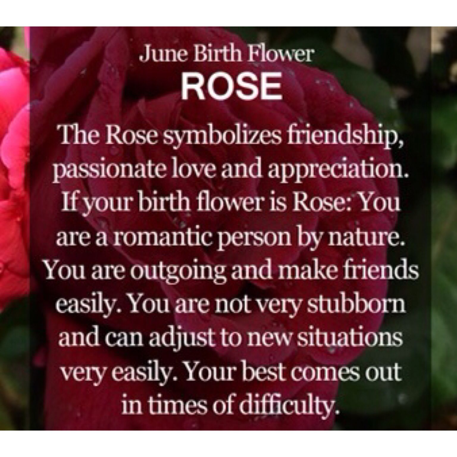 June- my Sisters birth flower | Things I love | Pinterest | Birth ...